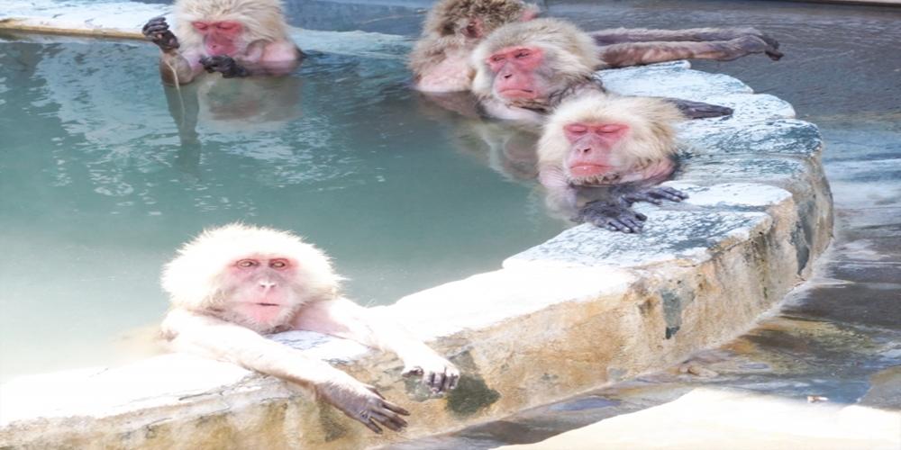 『主治医が見つかる診療所』で紹介された代謝が上がって自然とやせる入浴法